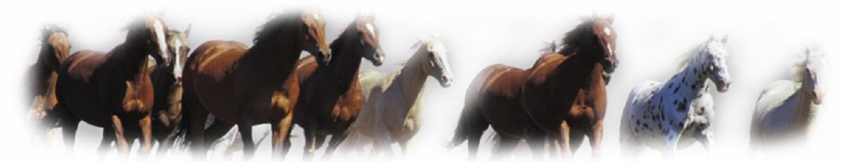 paarden-bottom1