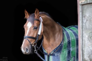 CalagranD_LWB_Horses_for_sale